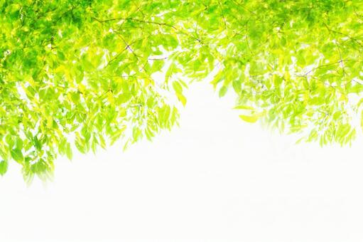 Sunbeams_fresh green