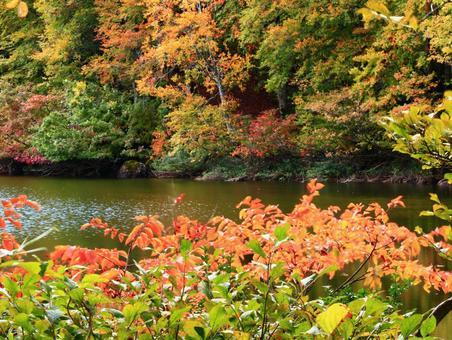 Autumn leaves · Autumn leaves of Niigata Myoko and Sennin Pond