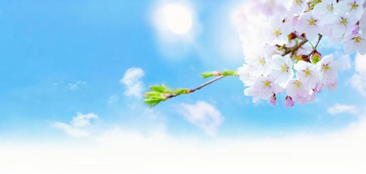 벚꽃과 태양