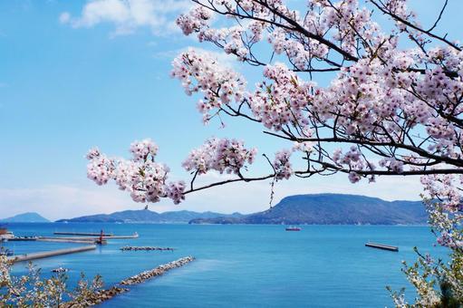 Seto Inland Sea and cherry blossoms