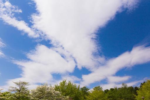 Sky Sky Background Blue Sky Sky and Clouds Sky Photo Light Blue Sky Clouds and Sky Clouds and Blue Sky