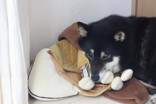 Shiba Inu resting on a pillow with a stuffed animal