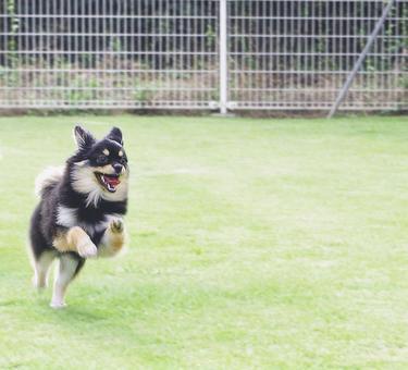 Dog running happily with dog run