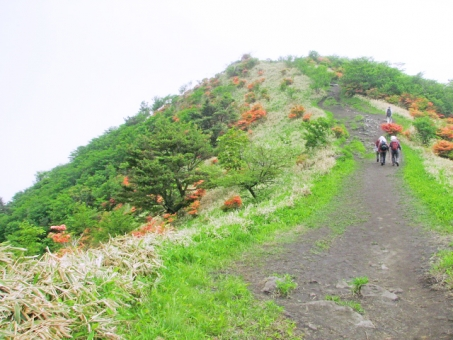 Hikers walking in the early summer mountains where azaleas bloom [People]