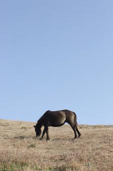 野生馬25