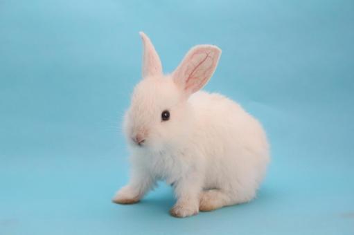 Rabbit 13