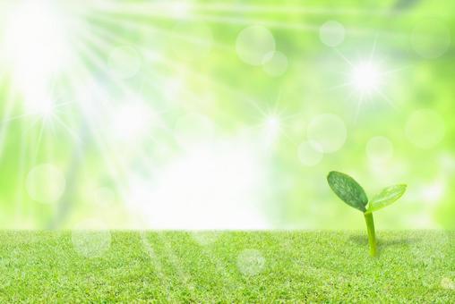 Futaba Glittering green image