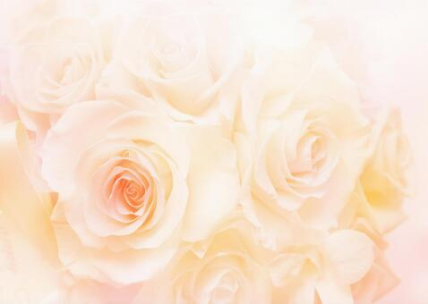 Rose _ Pale yellow