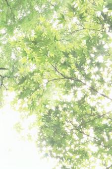 Sunbeams background glitter sun green