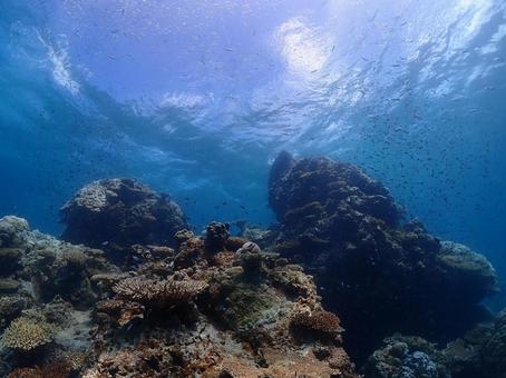 Diving spot, Ishigakijima seabed (Okinawa)