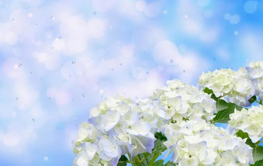 Image of rainy season with hydrangea Glitter background material 04