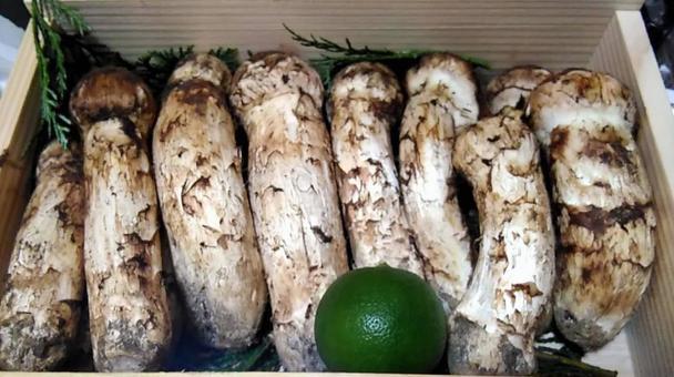 Matsutake mushroom gift