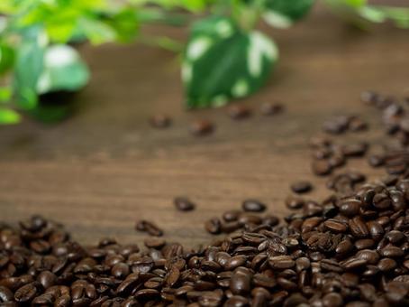 커피 콩 17