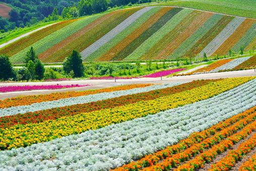 홋카이도의 꽃밭