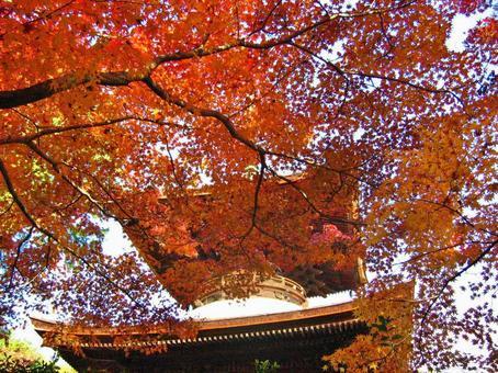 Jojakkoji Temple Autumn leaves Tahoto in late autumn