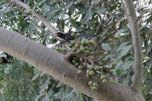 Pakistan Bird 14