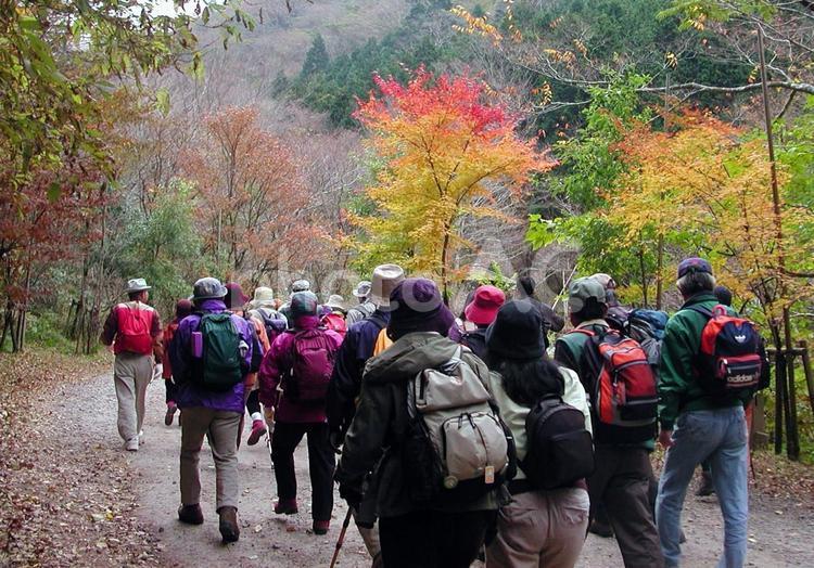 ハイキングの集団の写真