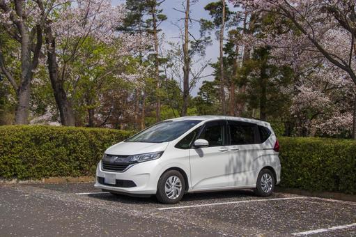 Sakura and white car # 2