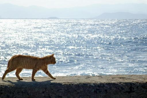 Seaside cat 3