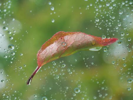 유리에 붙은 낙엽
