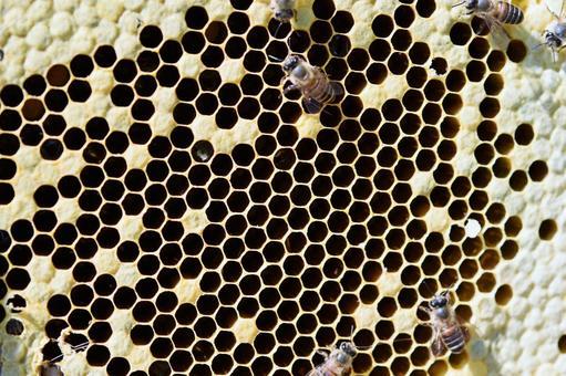 Bee's natural honey (forest treasure!)) Beauty health whitening Longevity