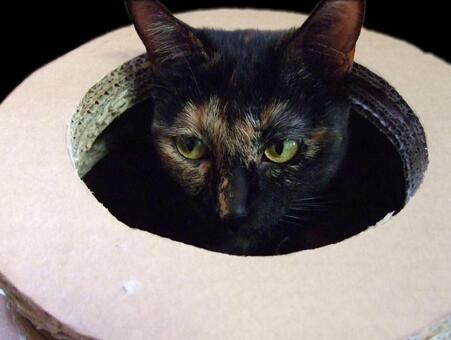 구멍에서 얼굴을 내미는 고양이 2