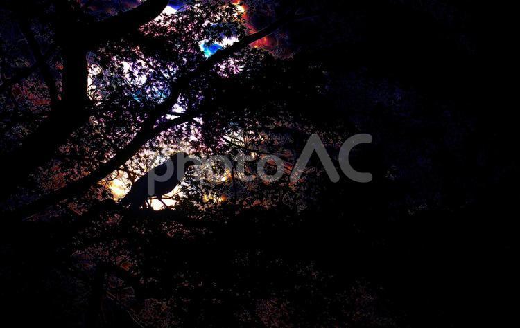 暗黒のカラスの写真