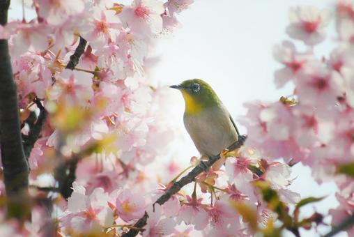 Spring came spring came