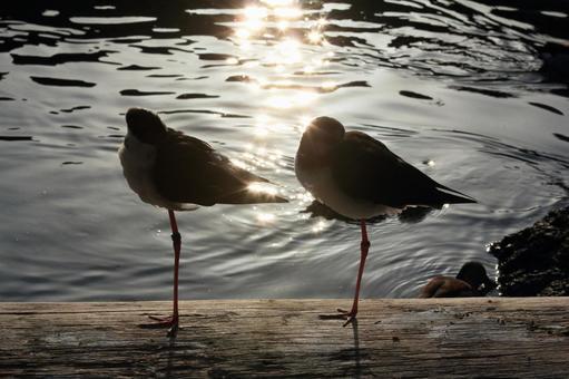Waterside bird 3
