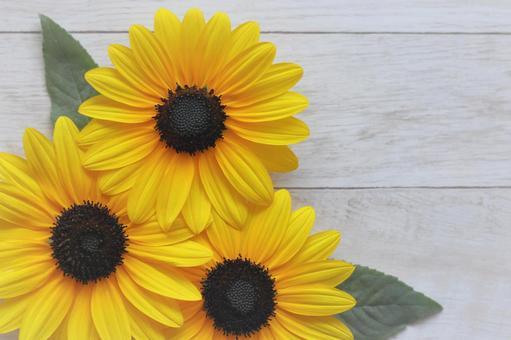 Sunflower Summer bright sunflower flowers