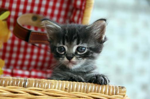 바구니에 들어간 고양이 2