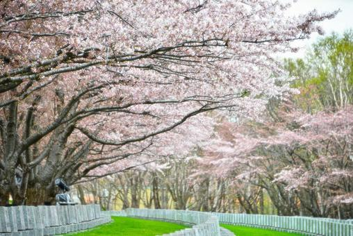 桜 and Wood Road 3