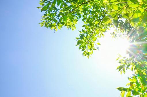 Blue sky, sun and green landscape Natural landscape