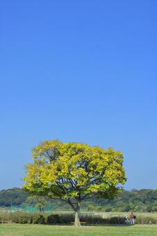 Tree scenery / Autumn -Peace-