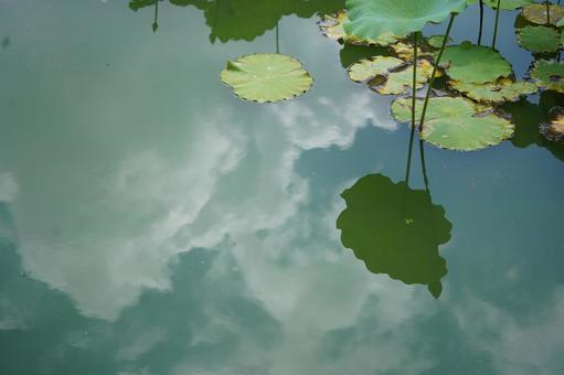 Summer clouds reflected on the surface of the water