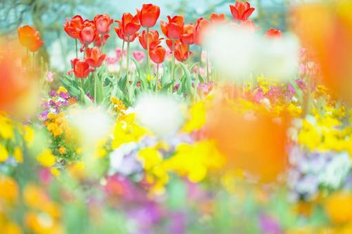 Fantastic flower 133