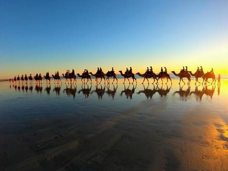 Camel Ride @ Sunset Beach