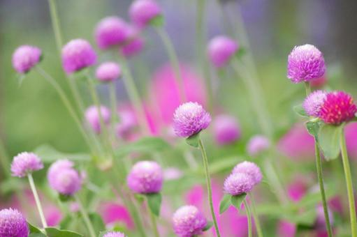 Summer flower -23