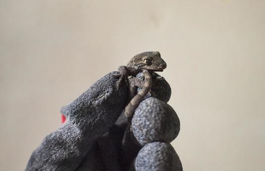 Catch a gecko