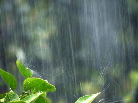 Rainy season leaves