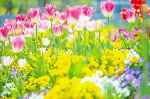환상적인 꽃 146