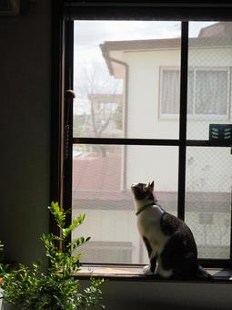 Wind chimes and cat 03