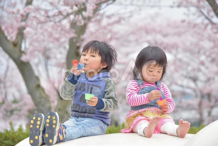 桜と子供たちの写真