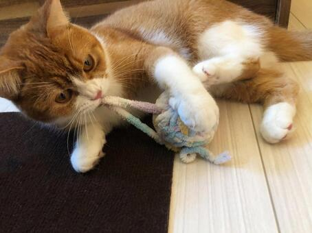 Cat 001 playing with a ball of yarn