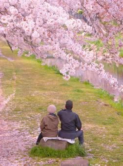 Cherry blossoms and old couple