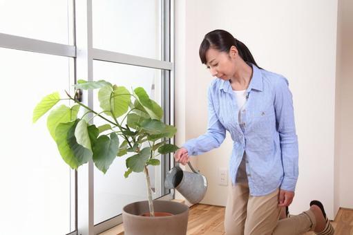 女性2,以提高水植物