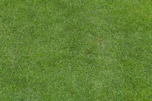 Green grass (background material)