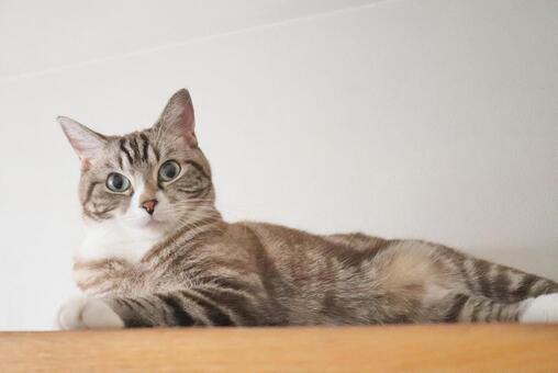 一隻可愛的虎斑貓,看著相機