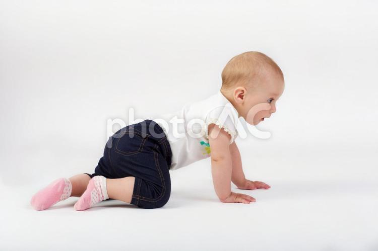 ハイハイする赤ちゃんの写真