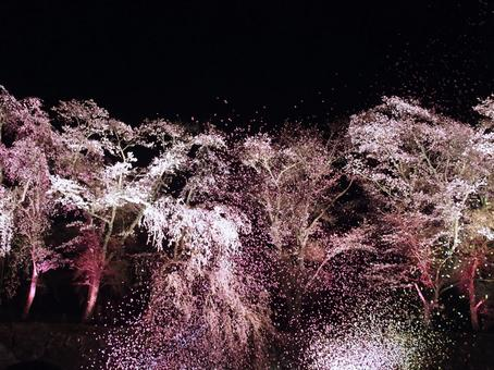 Cherry-blossoms at night light confetti